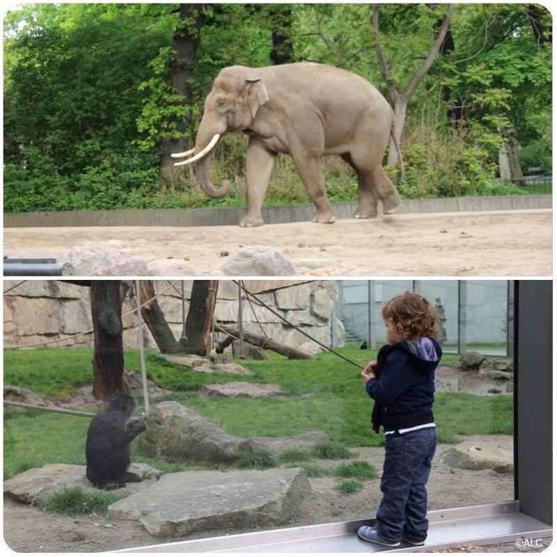 berlin-zoo